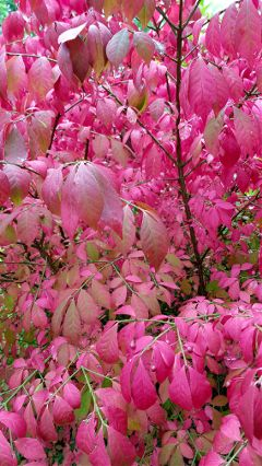 bush redleaves plants nature colorful