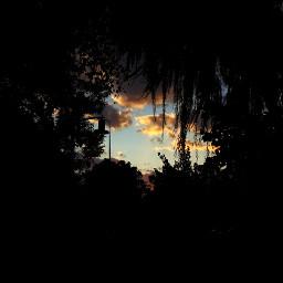 freetoedit clouds treesandsky trees sky