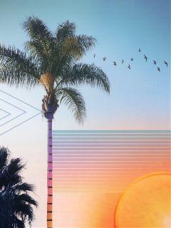 freetoedit geometric geometricart palmtrees california
