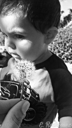 blackandwhite dandelion baby nature