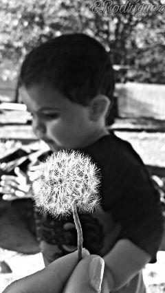 blackandwhite baby dandelion hand