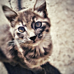 freetoedit cat lookingup lookingatyou hdr