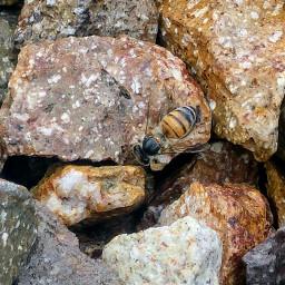 bee beeawesome beeyou❤🐝 beautifulnature mypicture freetoedit