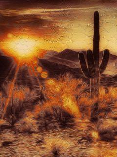 desertbeauty cactus sunset pretty freetoedit