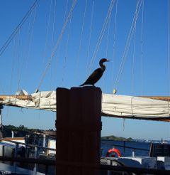 dpcboats pilings duck sailboat freetoedit