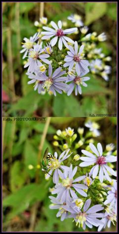 nature egphotography 2photos flowers bee