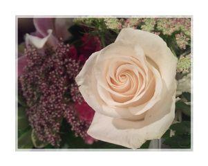 rose blossom flower flowersfollower
