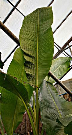 freetoedit palm amazon
