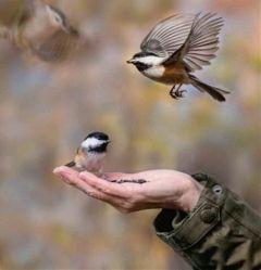 pohotography pepole birds holga