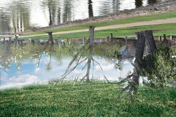 freetoedit twoworlds water trees fieldremix