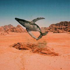 freetoedit whale myedit desert ballena