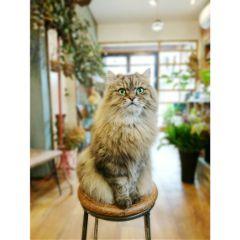 cat catlove catlover pet