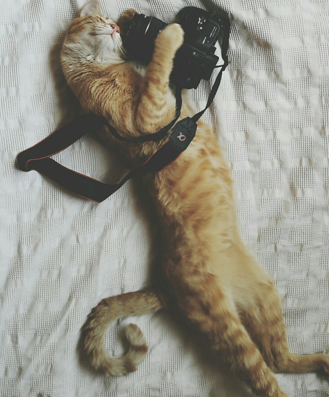 Good night 😽 #cat #camera#petsandanimals #domestic #oneanimal#lovecat#photography #lovely #pcanimalselfie #animalselfie