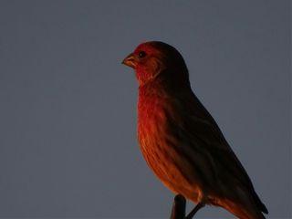 bird october dusk