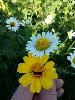 daisy flowers stickers happiness outandabout