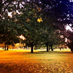 autumncolors leaflove trees landscape