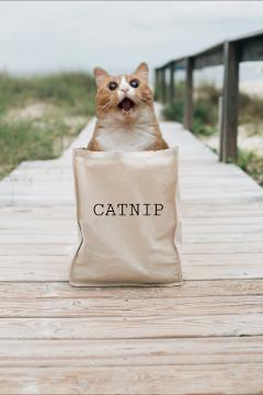 freetoedit catsofpicsart crazycat catnipfever justforfun thanks