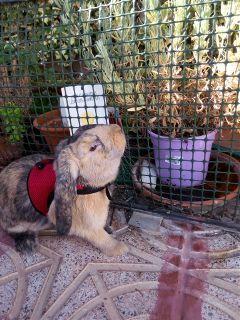 animals pets rabbit rabbitlove bunny freetoedit