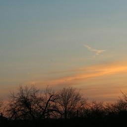 sunrise colourfulsky trees beautyofnature