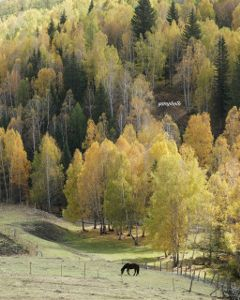 autumn autumncolors photography horse nature