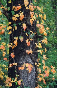 freetoedit wood