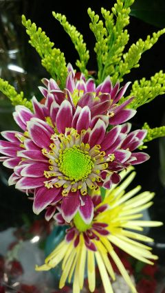 floral arrangement noedit