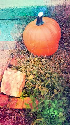 autumncolors pumpkinpatch pa halloween autumn