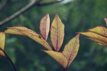 leaves leafs autumncolors adjusttool dodgereffect