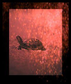 turtle nature lightanddark b&wred freetoedit