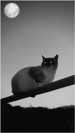 freetoedit blackandwhite catsofpicsart catsphotography. catsphotography