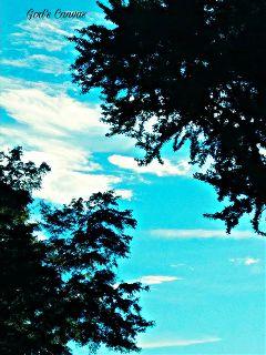 freetoedit blueskyandclouds trees tuesdayevening bensalempa