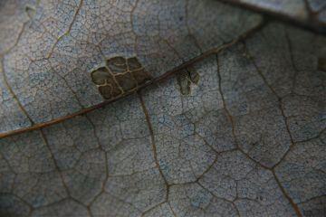 macro leaf autumn