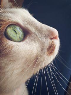 freetoedit cat eye cute bigeyes