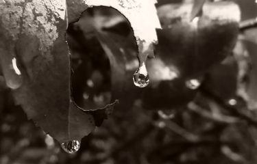 freetoedit mypic today leaves raindrops