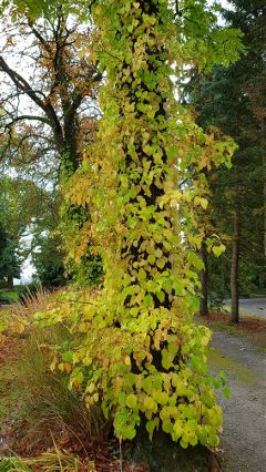walk park trees coloredleaves plants