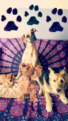 freetoedit dogslife dogremix