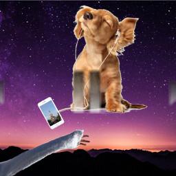 dog happy disneyland freetoedit