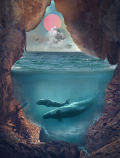freetoedit whale water underwater cave