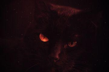 freetoedit cat eye face dark