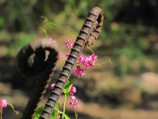 naturephotography flowerphotography bokeh desertbeauty traveltreasure