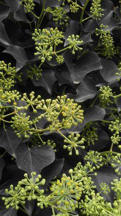 plant nature blackandwhite green colorsplash freetoedit