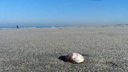 freetoedit beach shell dpcminimalism