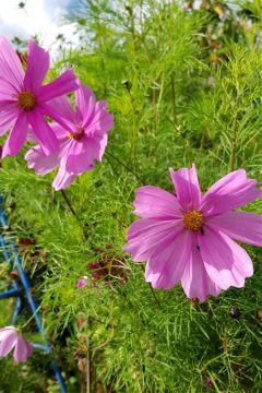 walk flowers pinkflowers plants nature