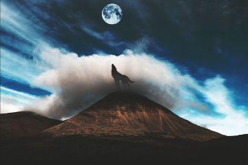 freetoedit moon wolf landscape mountainremix