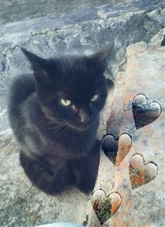 freetoedit love amor gato cat