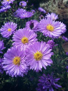 nature flowers adjusttool dodgereffect mygarden