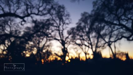 sunset blur trees sillouettes beautiful