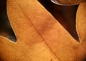 leaf autumn light forest macro