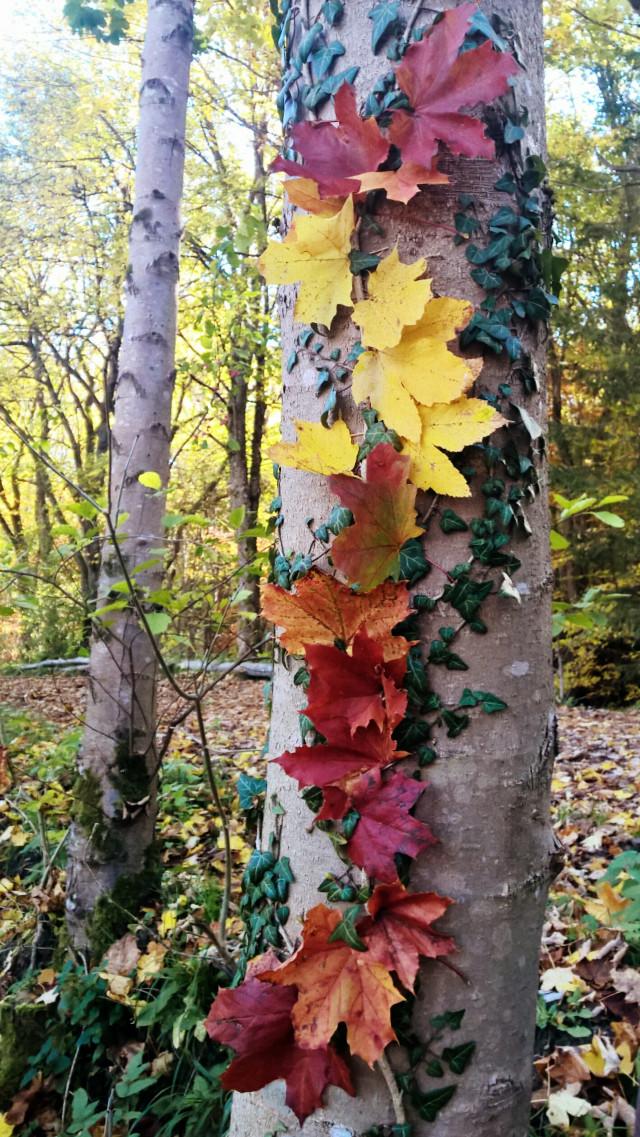 #landart #leaves #autumn #colorful