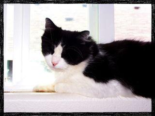 blackandwhitecat photography petsandanimals catlove cat
